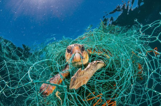 turtle stuck in fishing net because of ocean pollution